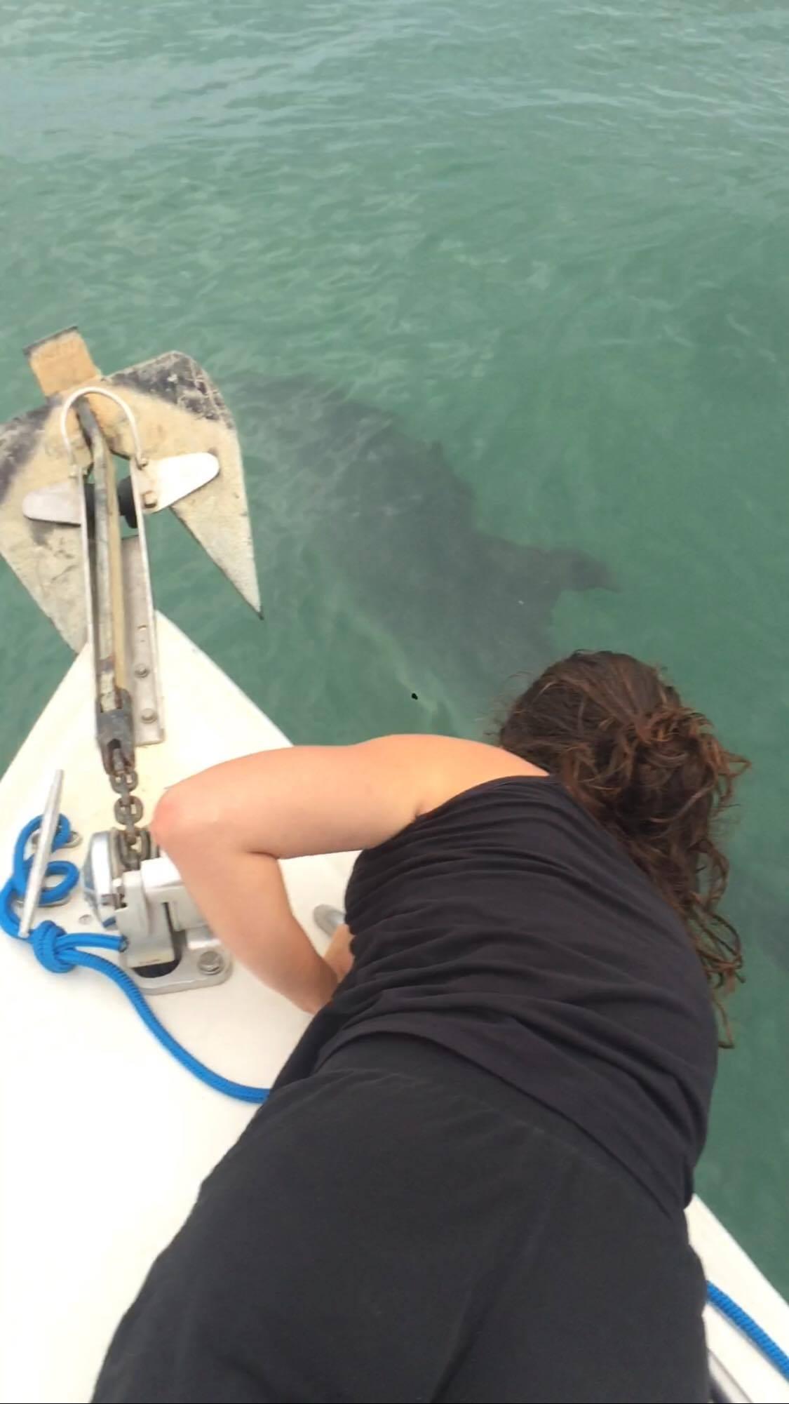 Banc de dauphins à coté de Cordouan